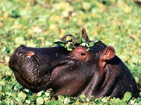 Конференция производителей корма для животных