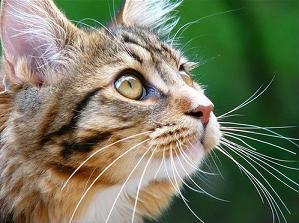 корм для кошек оптом