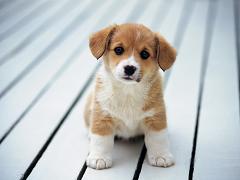 корм для щенков